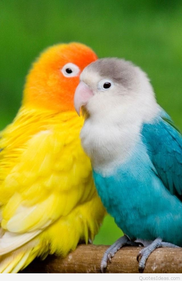 birds HD wallpapers for mobile